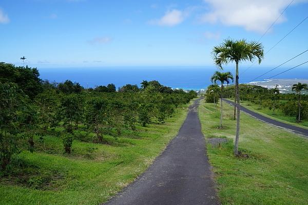 ハワイ島44