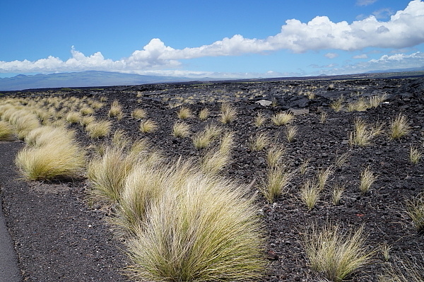 ハワイ島50