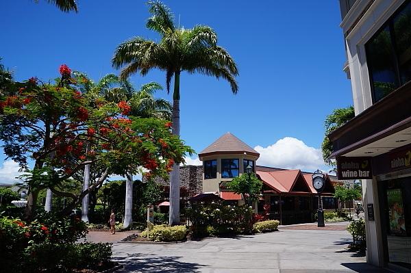 ハワイ島53