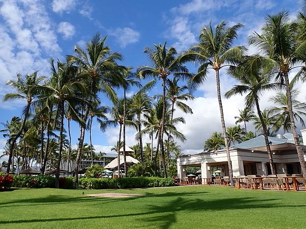 ハワイ島83