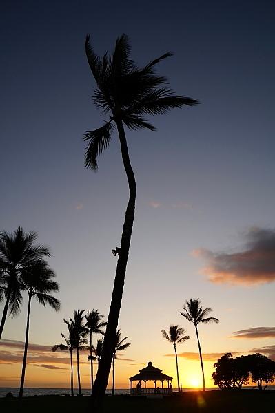 ハワイ島91