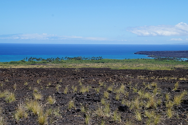 ハワイ島111