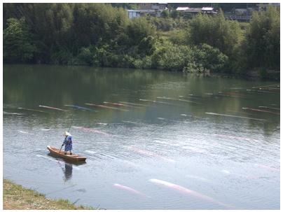 佐波川鯉のぼり9