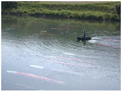 佐波川鯉のぼり10