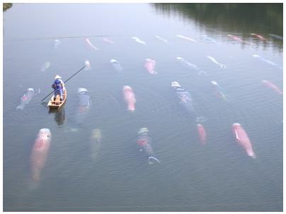 佐波川鯉のぼり12