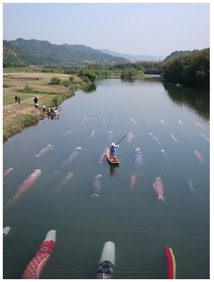 佐波川鯉のぼり17
