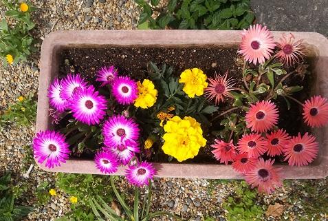 4 パート職場の花の様子