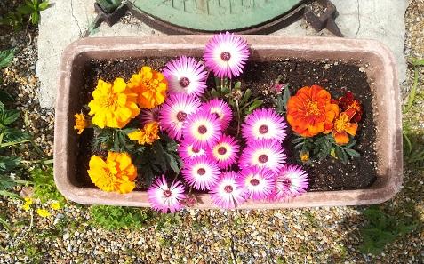 3 パート職場の花の様子