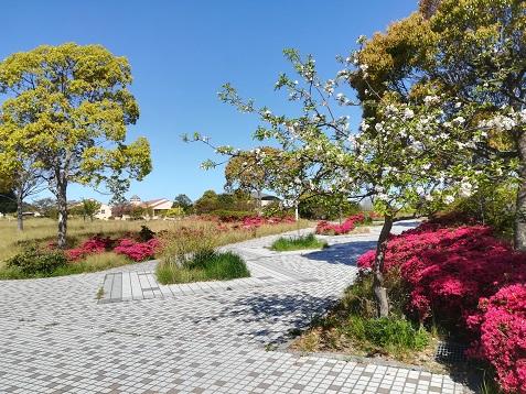 3 公園は春の花の盛り