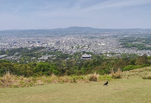 7 若草山二重目から東大寺方面