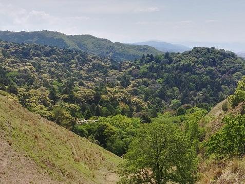 9 春日山原生林