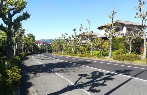 4 住宅街の街路樹は緑になっている