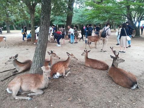 1 奈良公園の鹿