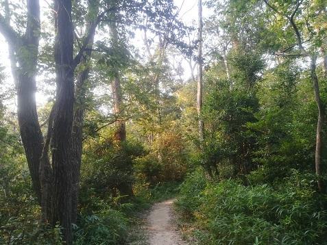 5 樹木の上部に朝日があたる
