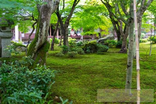 20190715京都圓光寺8