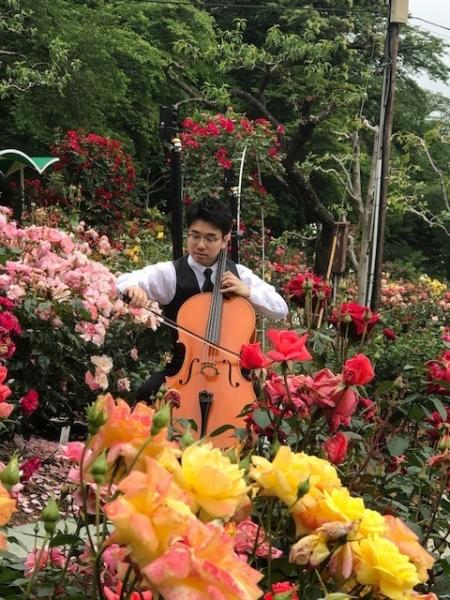 薔薇園のチェロ大 (2)