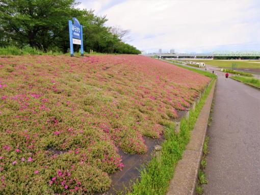 202  ピンクの花(1)