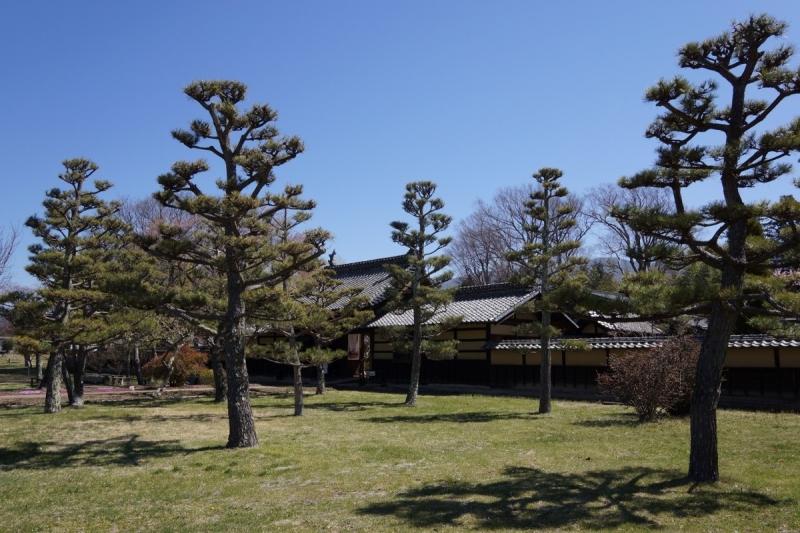 2松 (1200x800)