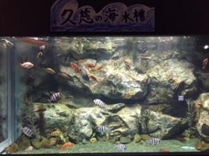 久慈の海水槽