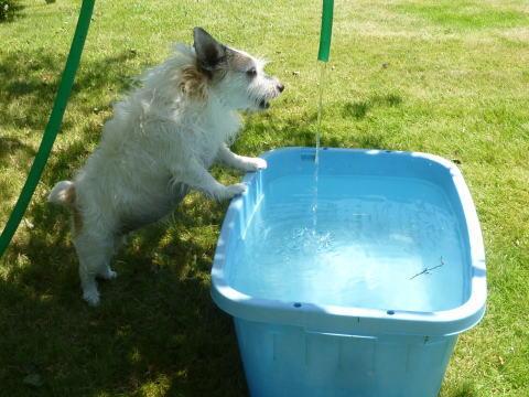 暑い日は水遊び(1)