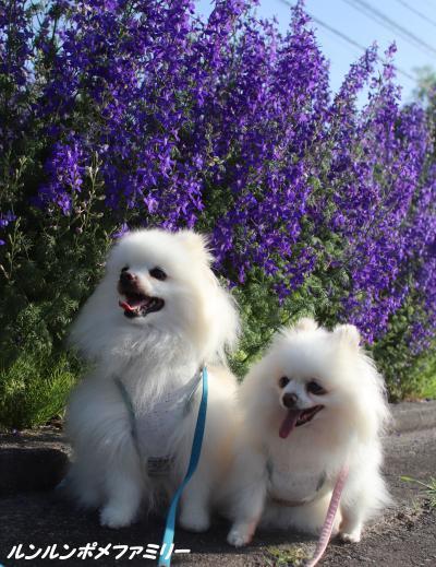 青紫の花と