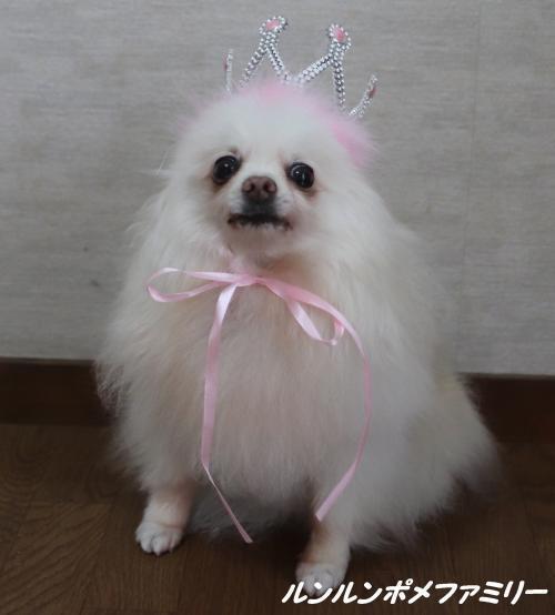 瑠妃王冠おすわり