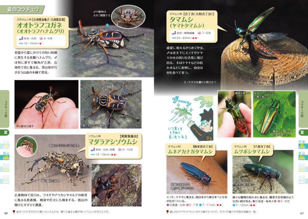 190626手すりの虫観察ガイド_2