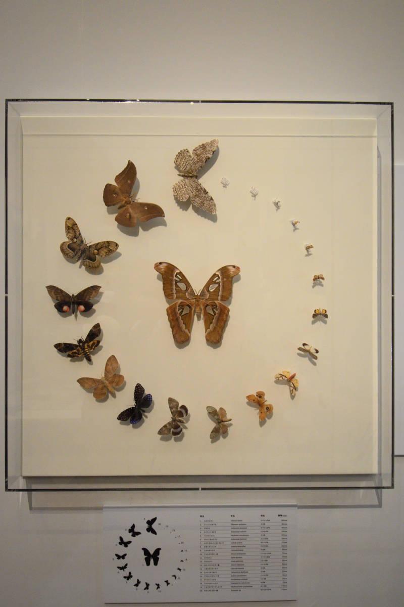 190819昆虫展_4