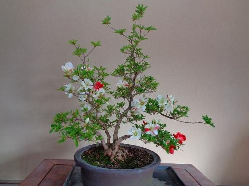 緑花の泉DSC07472