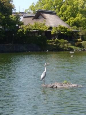 水前寺公園01