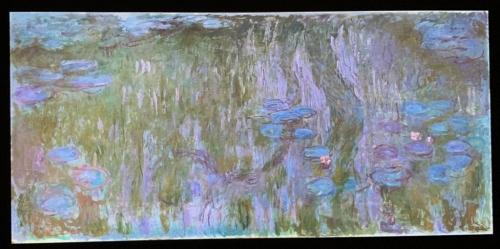 睡蓮、柳の反映