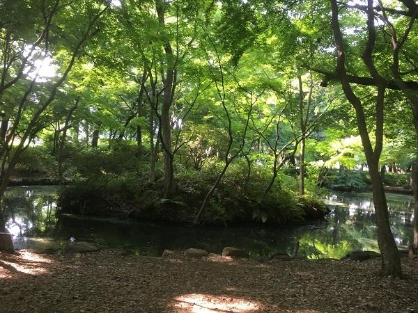 19,06公園全景