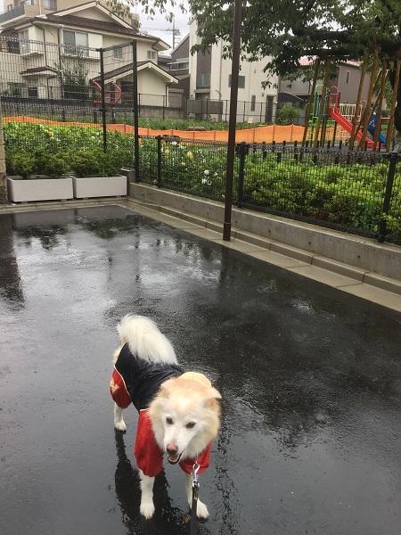 19,07雨降り散歩