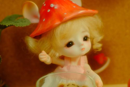 LOONGSOUL・Jomeeのジュン。つぶらな瞳の可愛い子をお迎えしました。