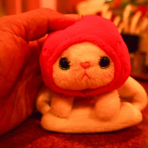 cho cho本舗のいちご猫ちゃんに、お布団を買ってあげました。