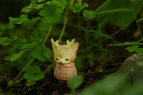 ツバキアキラが撮った、VAG・MORRIS、通称・つのねこ。茂みの陰で、かくれんぼをしている、つのねこ。