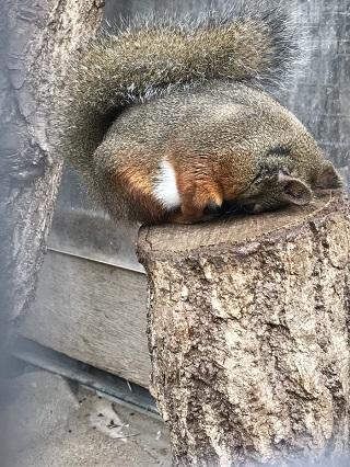 千葉市動物公園 ごめん寝