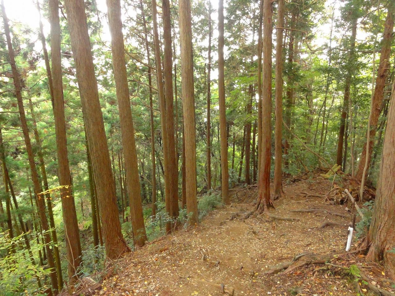 ジャイロキャノピーで岩湧山に行ってきた。