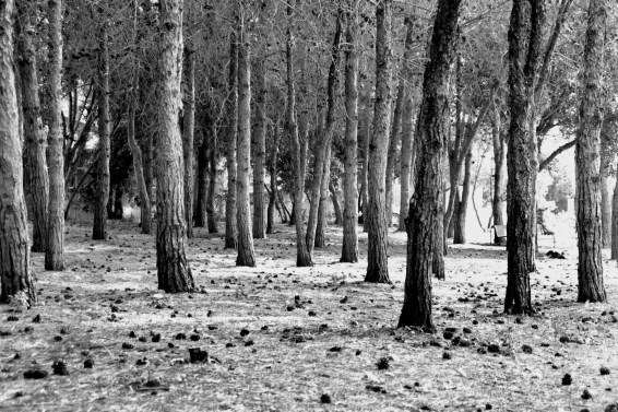 the-woods-in-black-and-white.jpg