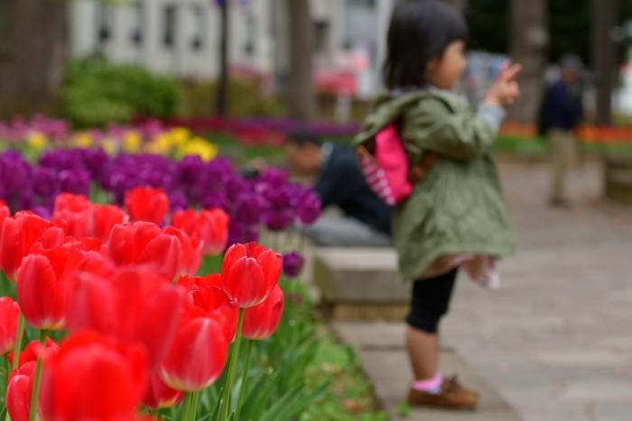 DSC_8255-001横浜公園チューリップ