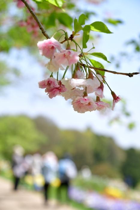 DSC_9976-001里山ガーデン