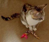 猫おもちゃ1