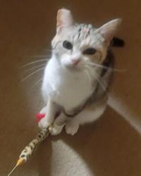 猫おもちゃ2