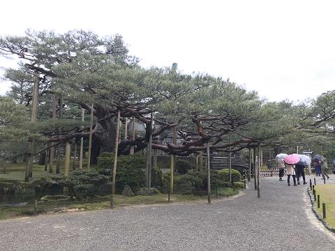 1647-兼六園:桜ヶ岡
