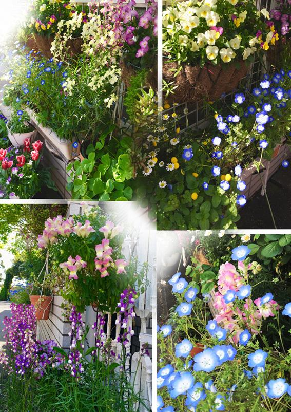 庭の花2019