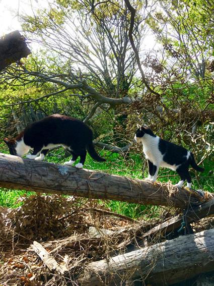 クロとチビの木登り
