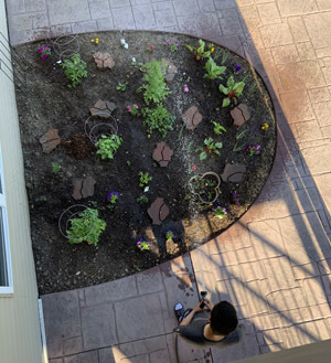 garden0610201901.jpg