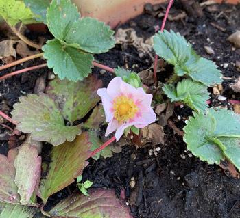 garden0610201902.jpg