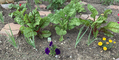 garden0610201904.jpg