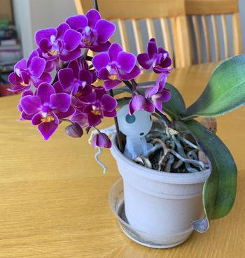 orchid04211901.jpg